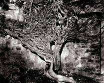 Naked Vine 1985