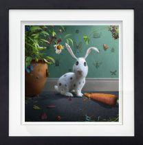 Mr Rabbit - F
